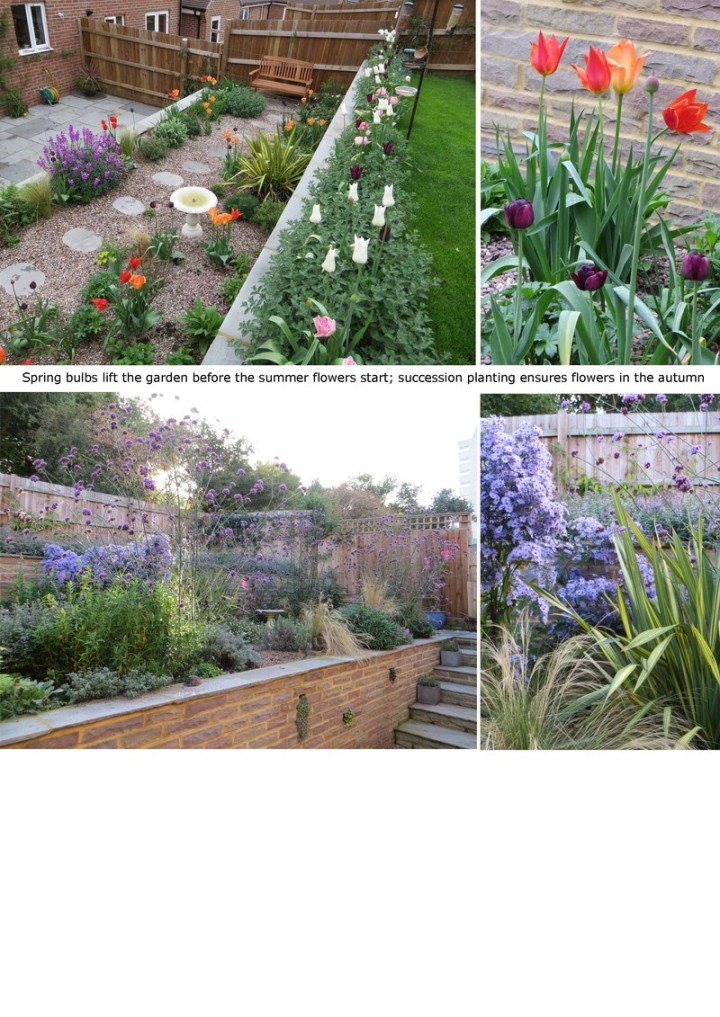 Simply garden design ascot search for sunshine Simply garden design